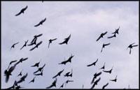 پرنده ها در آسمان