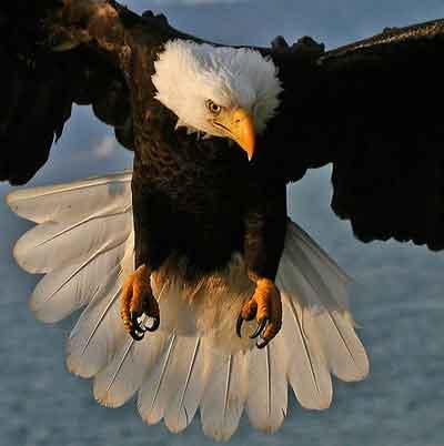 روزی ز سر سنگ عقابی به هوا خواست