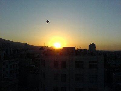 صبح، خورشید، پرنده