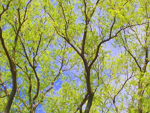 Tree In My Yard
