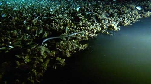 دریاچه زیر آبی