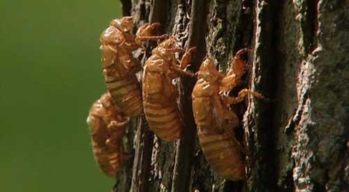 حشراتی که در پوست خود نگنجیدند ;)