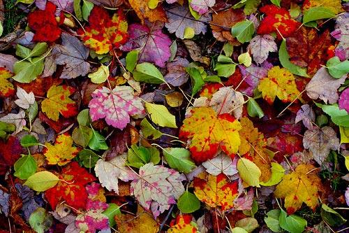 پادشاه فصلها : پاییز!