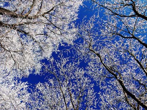 آبی و سفید