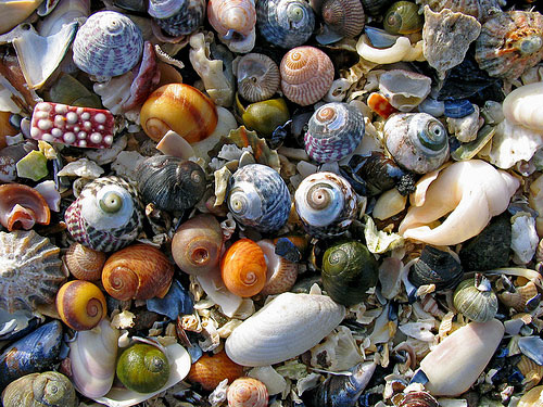 Shell pick 'n' mix, lightly arranged