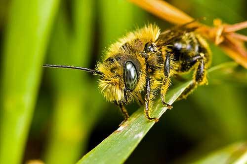 My Pet Bee #1