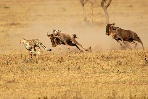شکار در پی شکارچی