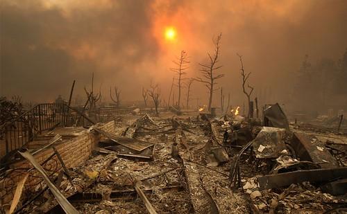 جنگل سوخته